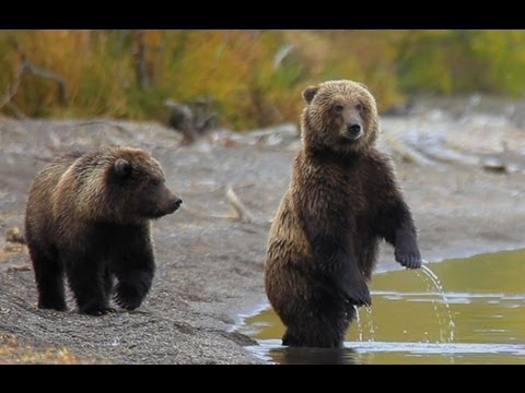 Funny Talking Animals: Call of the Wild - Bear Pretends to be a Person - Earth Rangers