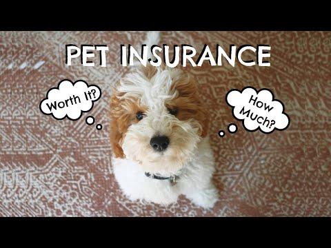 pets insurance