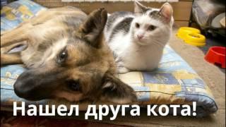 Бездомная собака в приюте нашла друга кота friendship dog and cat