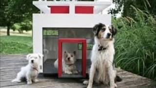 most expensive dog house - dog house ||