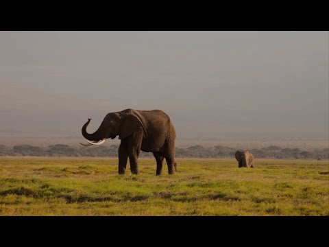 African Wildlife Foundation Owns Fundraising with Raiser's Edge NXT™