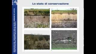 Restauro del paramento delle mura di Lucca
