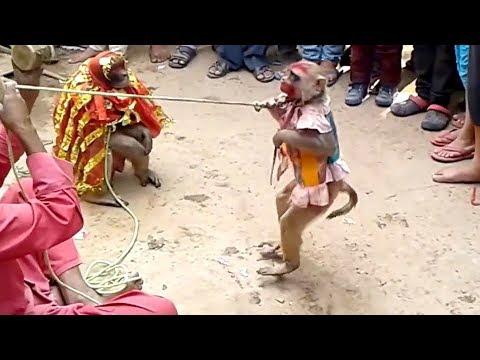 Haryanvi Bandar Bandriya Ki Shaadi - Funny Video | Comedy Video From My Phone