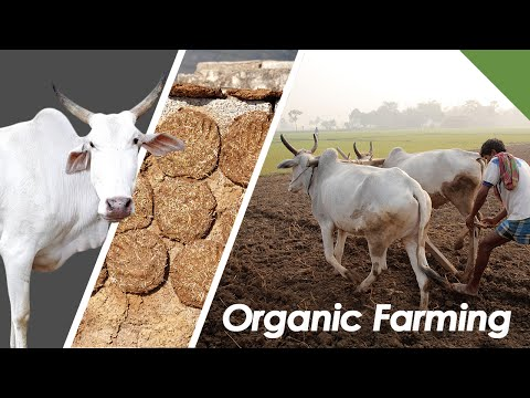 Incredible Zero Cost Formula For Organic Farming Using Cow Dung & Urine - Rajiv Dixit