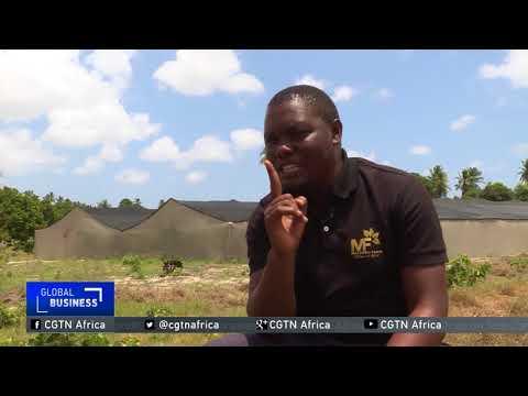 Tanzanian farmer's $50,000 investment yields profits in greenhouse farming