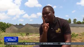 Tanzanian farmer39s 50000 investment yields profits in greenhouse farming