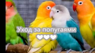 СОДЕРЖАНИЕ ПОПУГАЕВ! Уборка КЛЕТКИ! УХОД за попугаями. Питание попугаев/Nika Fox