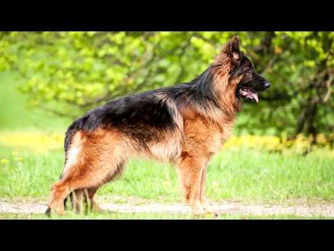 Najbolji Policijski Psi
