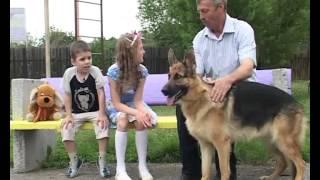 Детская передача - Про собак