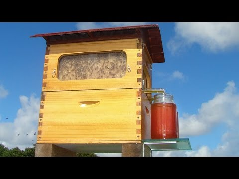 New Invention – Flow: Honey on Tap Directly From your Beehive