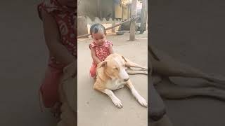 A child play with a angry dog fanny video 2019 arka