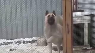 Dogs Headbanging to metal