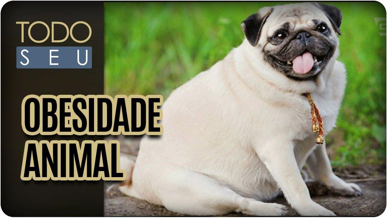 Todo Pet: Obesidade Animal - Todo Seu (26/05/17)