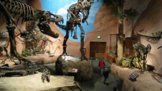 Dinosaur Museum at Thanksgiving Point, Lehi, Utah by Sergey Egorov