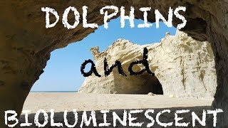 Dolphins and Bioluminescent light at Sapat - Buji Koh Beach Balochistan in 4K