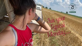 Vlog 96: A typical Monday at the Farm- Laying down 2nd cut alfalfa & wrangling cattle & kids too!