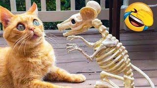 Funniest Dogs And Cats Videos 🐶😻 - Best Funny Animal Compilation Of The 2021  🤣