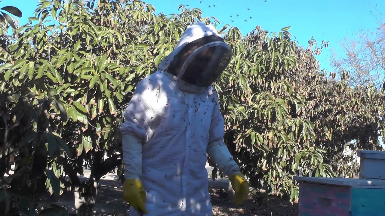 """African """"Killer Bees"""" And The White Demon Collecting Honey"""