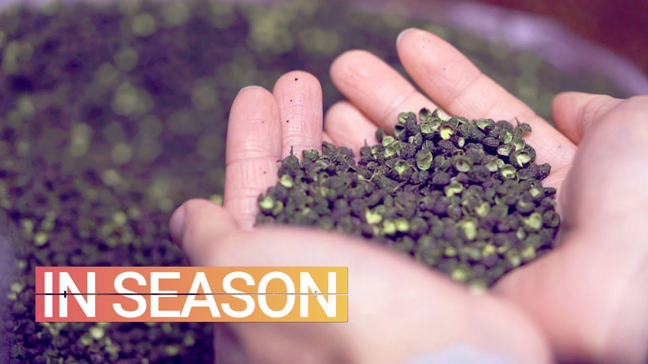 Why It's So Hard to Find Sichuan Peppercorns in America - In Season (S1E1)