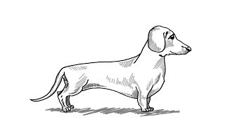 How to Draw A Dachshund Dog || Step by Step