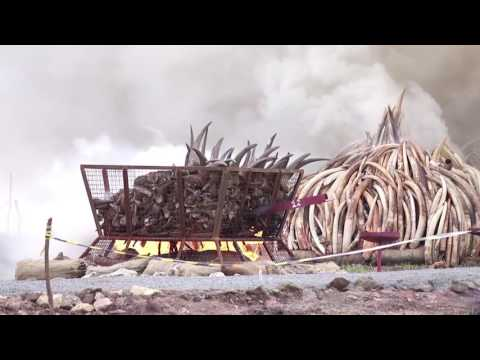 AFRICA UNITES TO SALVAGE ELEPHANTS AND RHINOS MARGARET