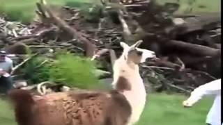 Animals vs Humans (funny)