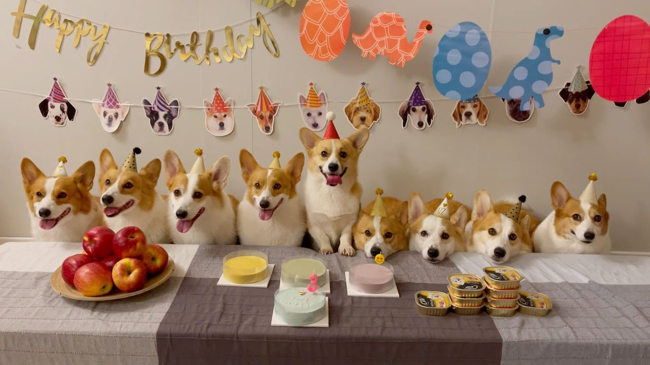 '친구 생일파티'라고 쓰고 '케익 먹방'이라고 읽는다.. ㅋㅋㅋ ㅣThe birthday party that turned(?) into a cake mukbang 🎂