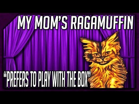 My Mom's Ragamuffin || Prefers to Play with the Box