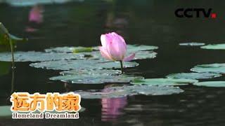 《远方的家》 20201215 大运河(37) 悠悠邗水 古韵荷香| CCTV中文国际 - YouTube
