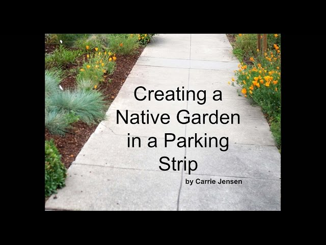 How I Did It: Creating a Native Parking Strip Garden