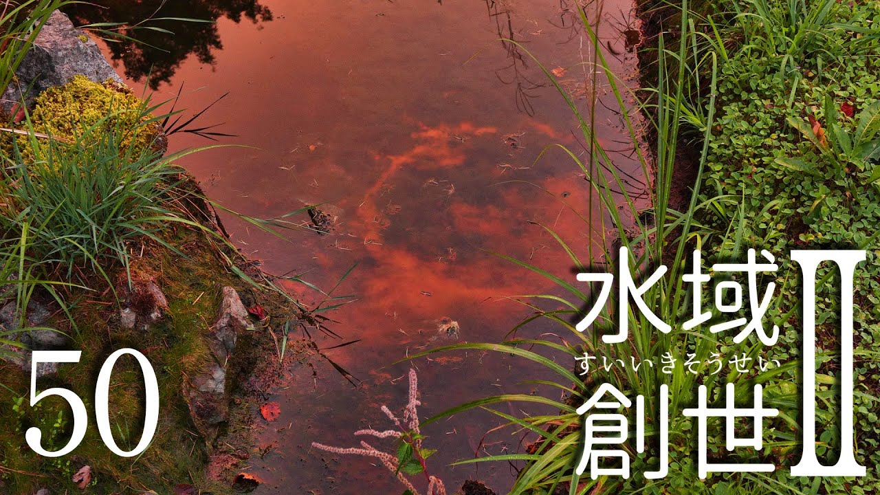 干上がり始めたメダカ池 水域創世Ⅱ- 50【4K】