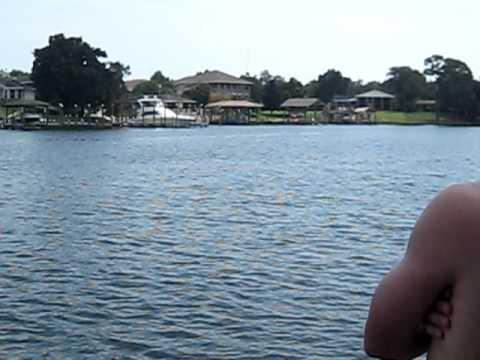 Dolphin Pod Swiming Through the Bayou