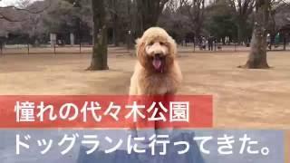 以前からずっと行きたかった代々木公園。 犬と一緒に原宿も散歩して楽し...