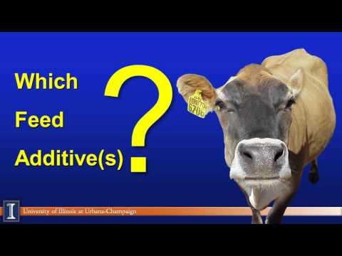 Hoard's Dairyman April webinar: Choosing feed additives wisely