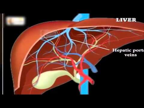 Human Anatomy And Physiology Course Description - Human Anatomy Physiology Free Online Course