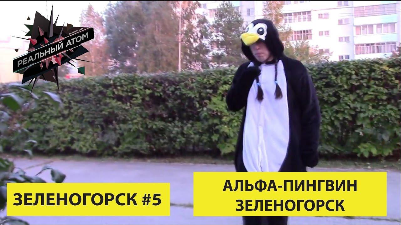 Зеленогорск #5 | Альфа-Пингвин Зеленогорск
