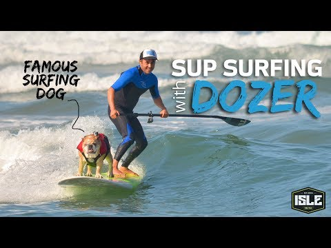 ISLE SUPs with Dozer the Famous Surfing Dog
