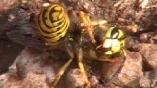 The Nature Explorers Chiricahua Expedition Arizona Part 4 of 12 Wildlife Insect Bee Sleep Awake