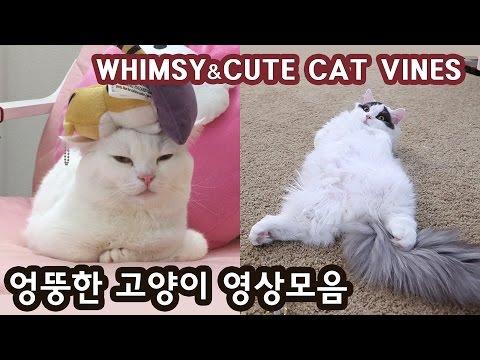 엉뚱한 고양이들 - 꼬부기 쵸비 순간포착 모음 WHIMSY AND CUTE CATS VINES