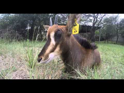 South Africa: Moholoholo Wildlife Rehabilitation Center
