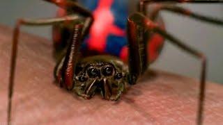 Peter Parker Gets Bitten By Spider   School Field Trip Scene - Spider Man (2002) MOVIE Clip HD