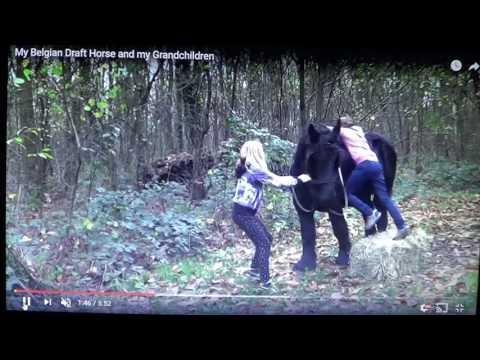 Kids Being Dangerous On A Draft Horse 0r Kids Having Fun -  I Explain What I See