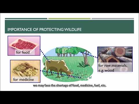 2 5C Importance of protecting wildlife