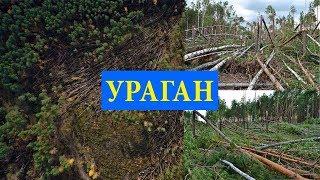 Последствия урагана в Гусь-Хрустальном районе, повалило лес.