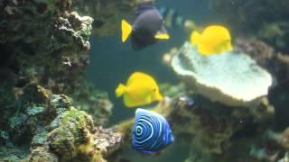 Обслуживание аквариума(, 2014-07-31T12:13:50.000Z)