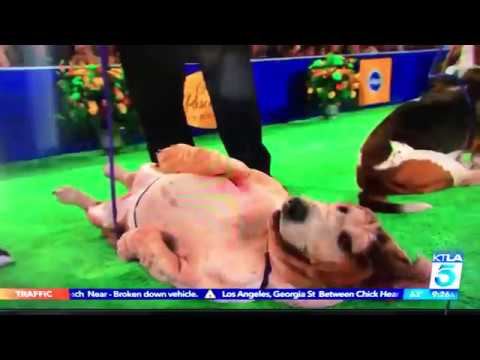 The American Rescue Dog Show and Mike Levitt featured on KTLA