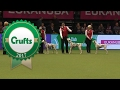 Kennel Club Breeders Competition | Crufts 2017