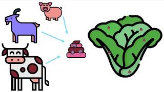 Shiga toxin-producing E. coli (STEC) introduction video