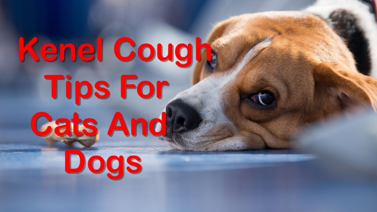 15 Useful Home Remedies For Kennel Cough In Dogs And Cats Youtube