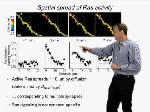 Karel Svoboda (HHMI) Part 2: Plasticity and signaling of single synapses